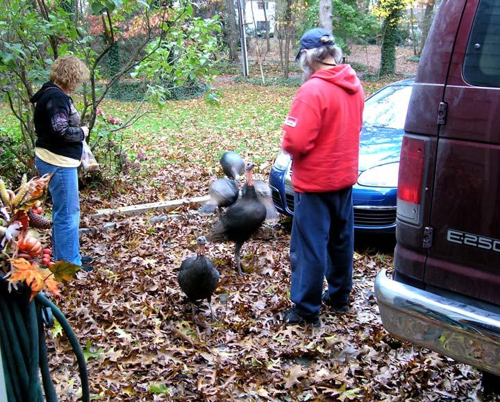 Lia and Bill feeding the turkeys