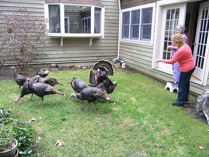 Lia Chasen, with friend Sandra Pak, feeding the wild turkeys