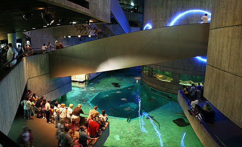 Inside the National Aquarium