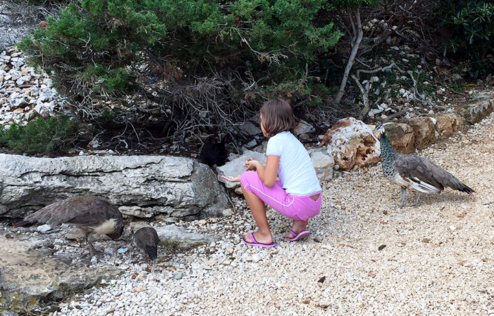 There are many tame animals on Lokrum, including peacocks and rabbits